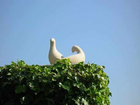 Doves on an Ivy Covered Chimney