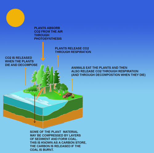coal and the carbon cycle
