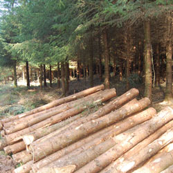 coombe farm timber uk