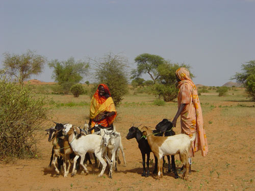 Kids for kids darfur charity new goats loaned to families