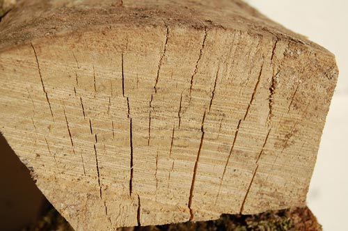 cracks in the endgrain of a seasoned log of firewood